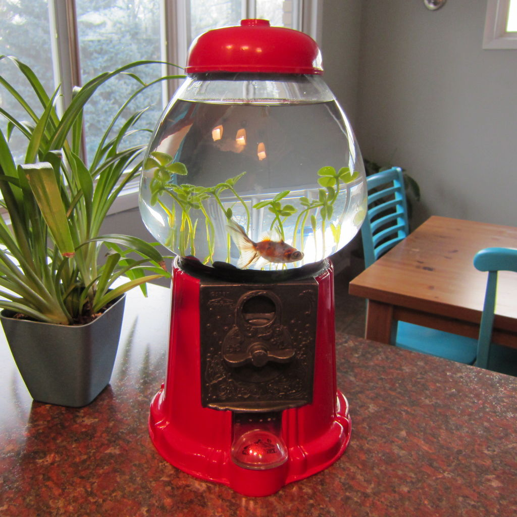 diy gumball machine fish bowl