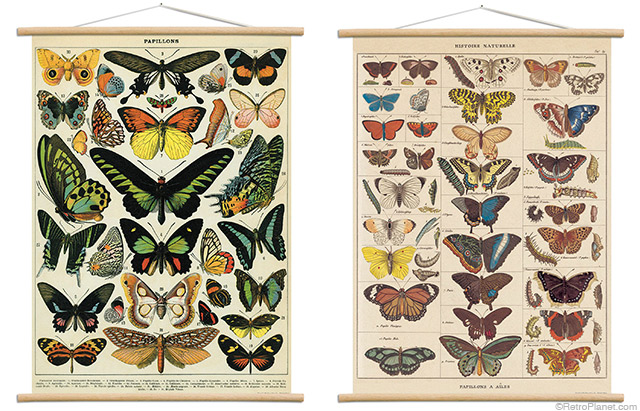 Butterfly Charts